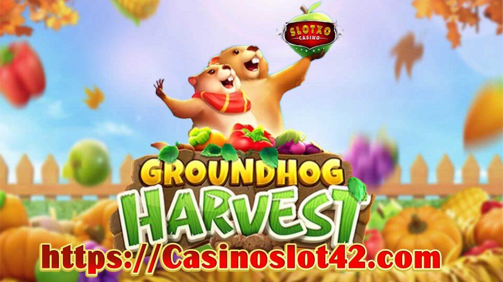 สล็อตGroundhog-Harvest-min