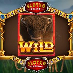 Buffalo-Win-buffalo-.-min