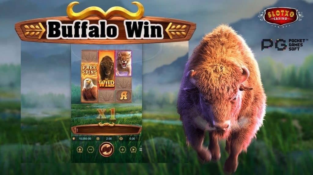 Buffalo-Win1-min